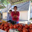 Kui turul ringi jalutada, tunnetad nüüdseks juba täielikku sügisehõngu. Viimasedki maasikad on kadunud ning müügiletid on vallutanud kasvuhoonesaadused. Kuigi leiab ka tikreid – nii punased kui ka rohelisi –, mustikaid, […]
