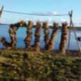 Eesti kohal tugevnev kõrgrõhuhari kindlustab pühapäevaks küll suvised soojakraadid. Venemaal valitseva madalrõhkkonna mõjul võib päevasel ajal üksikuid hoovihmu tulla eelkõige Ida-Eestis. Ilmateenistuse teatel on pühapäeva öösel vähese ja vahelduva pilvisusega […]