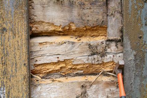 Tooneseppade ja majasikkude poolt kahjustatud puit Aavikute majamuuseumi fassaadis. TÕNU SEPP