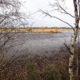 Keskkonnaministeerium plaanib Saikla mahajäetud turbatootmisalal taastada loodusliku soo, mis oleks esimene kord, kui Saaremaal vana turbatootmisala taassoostatakse. Keskkonnaministeeriumi maapõueosakonna spetsialist Moonika Aunpuu ütles, et Saikla jääksoos plaanitakse korrastamistöid Marjasoo järve […]