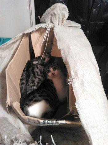 JÄID ELLU: Vaatamata õhukindlale pakendile õnnestus kassipoegadel ellu jääda.  ERAKOGU