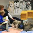 Saaremaa keskraamatukogu lasteosakonnas käib laupäeviti lugemiskoer Mia, kes aitab algajail kirjatarkuse nõutajail tähtede, sõnade ja lausetega paremini sõbraks saada. Mia on turjakas alaska malamuut, kes lisaks tublile koeraspordikarjäärile agilitys on […]