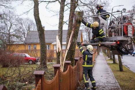 KUKKUS TEELE: Peamiselt tuli päästeteenistuse meestel tegeleda murdunud puudega, mis olid langenud teele, aedadele või elektriliinidele. Fotol saevad päästjad murdunud puud Uus-Roomassaare tänaval. TAMBET ALLIK