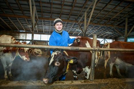 TULEMUSLIK kooslus: farmijuhataja Lauri Post ja tublid piimalehmad eile hommikul Haeska külmlaudas. TAMBET ALLIK