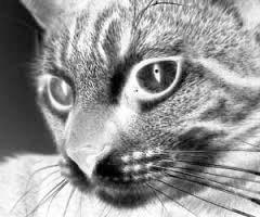 """MTÜ Saaremaa Lemmikloomade Turvakodu jagab oma Facebooki lehel hoiatust: """"Tähelepanu, Kudjape inimesed, nii suured kui ka väikesed! Mõned päevad tagasi sattus kliinikusse üks ilus ja hoolitsetud kodukass, toojaks ta oma […]"""