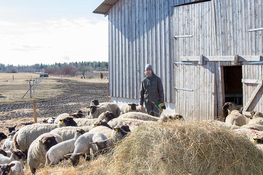 """Viimase aasta aja jooksul on töötukassa kaudu kolm korda otsitud inimest, kes tahaks sulaseks hakata. Mustjala vallas asuv Andruse mahe- ja turismitalu on üks koht, kus sulast vaja.  """"Sulane […]"""