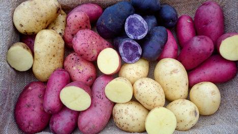 """""""Vahetevahel tahaks aga osta ka värvilisi kartuleid, näiteks pühadelaua salatisse,"""" ütleb Sirje Avingu. Foto: ERAKOGU"""