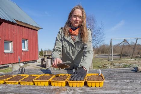 ÜRDIKASVATAJA TEAB: Popi talu perenaise Mari Kübarsepa sõnul on oluline, et väikesed taimed kuiva ei jääks. MAANUS MASING