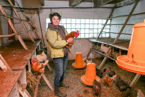 LAUDAS: Anu Hansen on oma lindudega väga rahul – munevad usinalt ja on sõbralikud MAANUS MASING