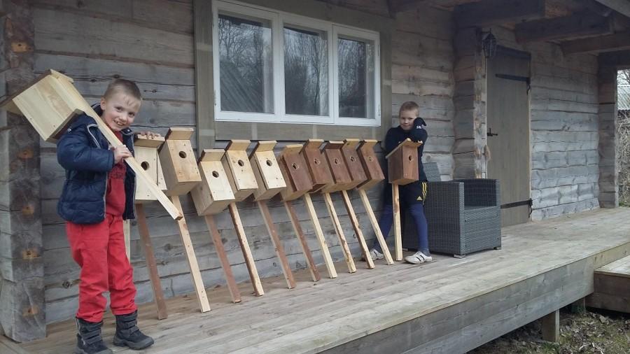 Valjala vallas Kalli külas elab kaks venda, 9-aastane Oskar ja 7-aastane Sander Maripuu, kes võtsid kätte ja tegid isa abiga valmis ligi paarkümmend kuldnokkade pesakasti. Poiste ema Kristiina Maripuu sõnul […]