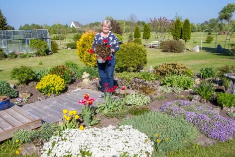 SADA LIIKI: Muhulase Aire Liigi aias on lilli küll sadat liiki.  AARE LAINE
