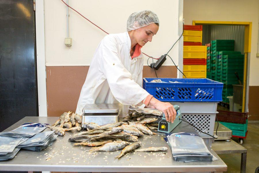 Nasval Leedevälja ja Saare Hõbeda kaubamärgi all kalatooteid valmistav OÜ Ösel Fish vajab oma tootmistsehhi nobedaid ja lahtiste kätega töötajaid. Ettevõte vajab tootmistsehhi nelja inimest, pakkudes stabiilset, tähtajatut ja täiskohaga […]