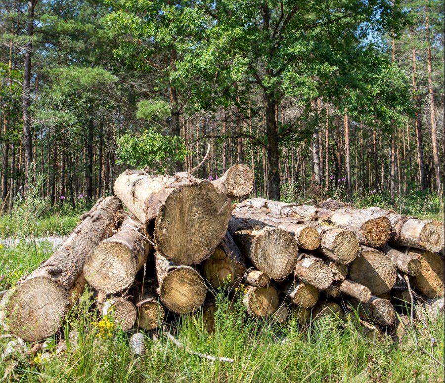 Maa-ameti veebilehel ilmunud numbrid näitavad, et Saare maakonna metsaturul valitseb hetkel suhteline vaikus ja langustrend, küsimus vaid on, kui kauaks? Viimaste aastate madalseisus on nii notariaalselt registreeritud metsatehingute arv kui […]
