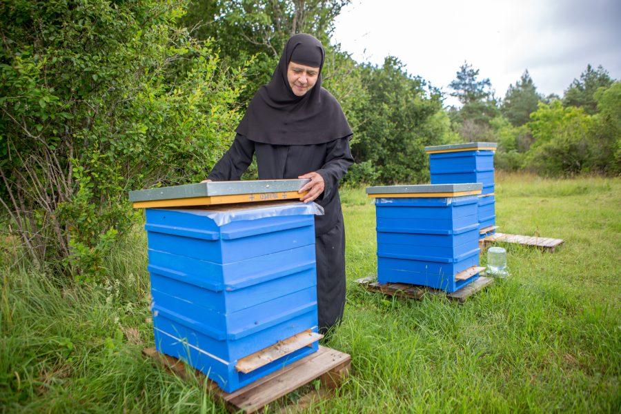 """End mesinikuks koolitanud Reomäe kloostri eestseisja nunn Theofili püüab koos kaaslastega käima lükata kloostri oma meemajanduse. Esimesed kaheksa taru mesilinde on juba sumisemas. """"Me alles püüame oma mesilat luua,"""" ütleb […]"""