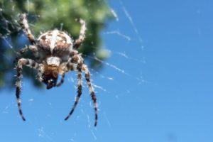 Ämblik koduaias
