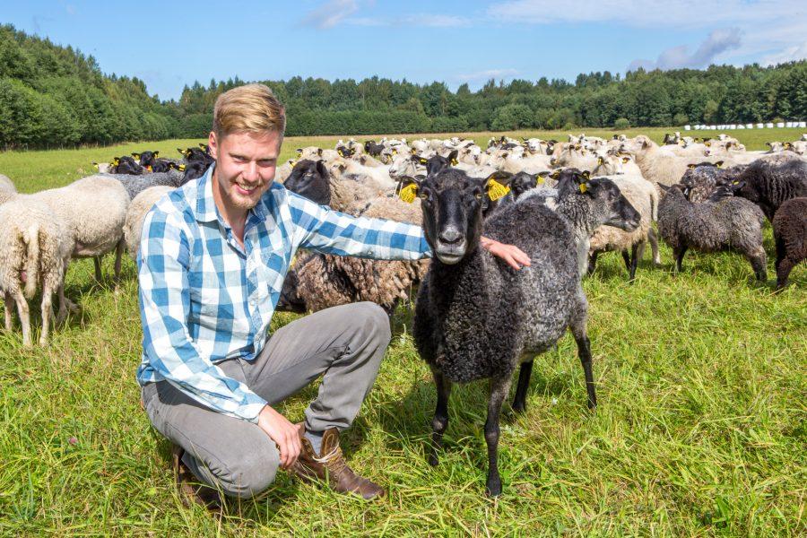 """Eesti lamba- ja kitsekasvatajate liit korraldab septembris toimuvatel Saare maapäevadel tõujäärade näitusmüügi, mis on esimene samm siinse lambaliha ekspordikõlbulikkuse parandamisel. """"Kutsume Saaremaa lambakasvatajaid teada andma, millist tõugu jäärasid nad sooviksid […]"""