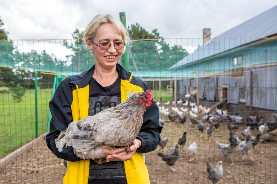 Leisi valla Laugu küla Sepa talu perenaine Kersti Nõmm avastas oma kanade hulgas tõelise kanaema, kes võttis Sakala haudejaamast toodud 60 muna oma hoole alla, haudus tibud välja ja kasvatas […]
