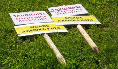 OHUPIIRKOND: Kodusigadel tuvastas VTA Saaremaal seakatku selle nädala alguses, kui sai laborist kinnituse kahtlusele, et Valjala valla Sakla külas asuvas 2700 seaga farmis on sigade Aafrika katk. Farmi omanik ütles pärast seda, et kahtlustab sabotaaži. MAANUS MASING