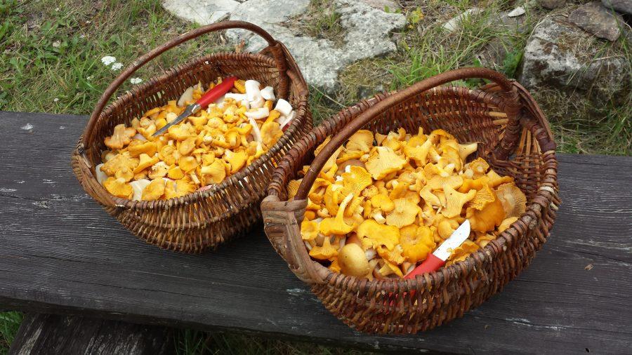 Anita Kangur ja Sirje Paakspuu peavad end üsna tavalisteks seenesõpradeks, kes korjavad tavalisi söögiseeni ja tarvitavad neid söögiks kõige traditsioonilisemal moel. Anita ja Sirje on suured sõbrannad, kes püüavad koos […]