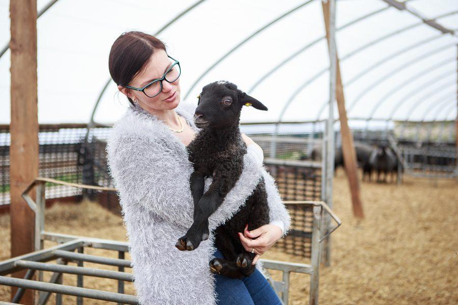 Kohus leidis, et Eesti lambakasvatajate seltsi eestvedajale Annika Välile kuuluv ettevõte pettis aastaid tagasi PRIA-lt toetusi välja. Mitut firmat hõlmavat skeemi harutavad juba kolmandat aastat lahti ka politseiuurijad. Põllumajanduse registrite […]