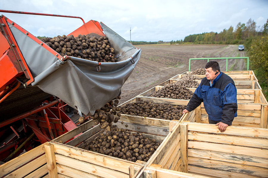 """Saaremaa suuremad kartulikasvatajad hindavad tänavust saaki korralikuks, ehkki väikesi tagasilööke haiguste ja sademete näol oli. """"Saagil ei ole viga, aga kuidas see saak säilib, see on iseasi,"""" ütles Orissaare valla […]"""