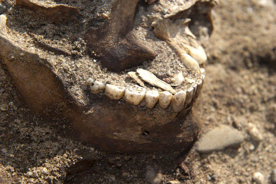 USA-s asuva Wisconsin-Madisoni ülikooli teadlane T. Douglas Price uuris 2008. aastal Salmel avastatud laevmatuse luustike hambavaapa ja jõudis järeldusele, et tegu oli rootslastega. Eesti Ekspress vahendab ameeriklase seisukohta, et hambavaabas […]