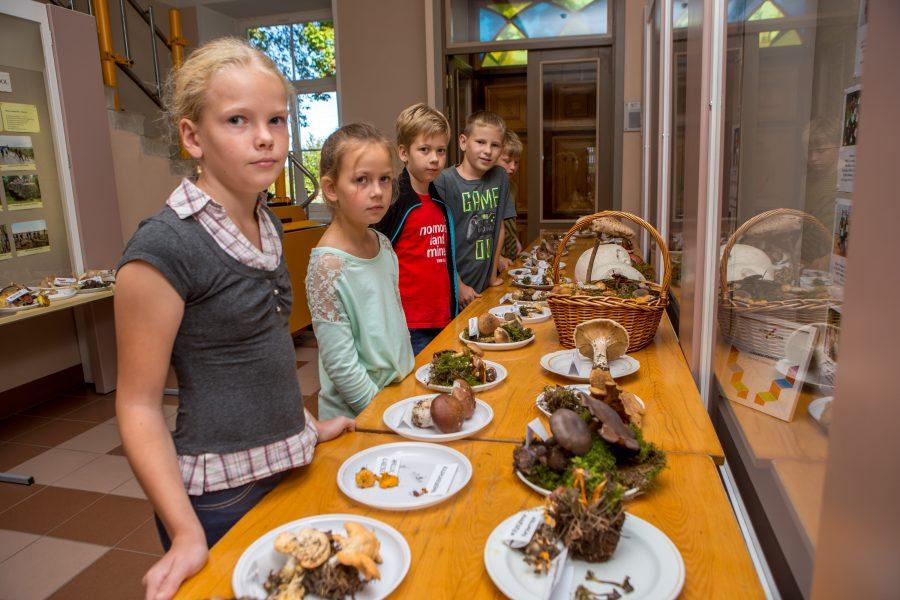 Selle nädala algul avati Lümanda põhikoolis väikestviisi traditsiooniks kujunenud iga-aastane seene- ja marjanäitus. Kui seenenäitus oli avatud vaid loetud päevad, siis marjaväljapanekut näeb endiselt. Kooli direktor Liia Raun tõdes, et […]
