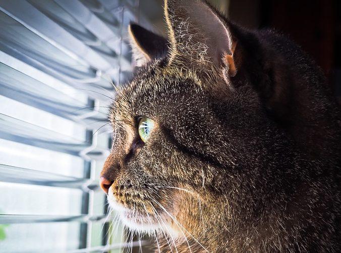 11 aastat tagasi võtsime lastele lemmikloomaks kassi. Loom on nõuete kohaselt kastreeritud ja kiibitud. Kass elab toas, aga käib ka õues. Nüüd siis kirjutab Lääne-Saare vald ette, et kassi tohib […]