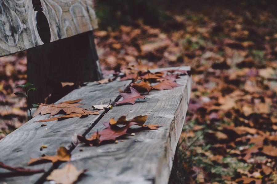 Kuressaare linna elanikud saavad sel sügisel Kudjape jäätmejaamas puulehti ja muid biolagunevaid aia- ja haljastusjäätmeid ära anda tasuta. Linnavalitsus teatab sotsiaalmeedias, et jäätmete tasuta üleandmist võimaldatakse Kuressaare linna sisse kirjutatud […]