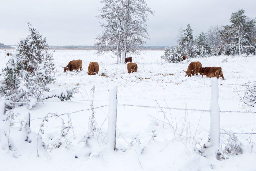 """Saarlasest ilmaennustaja Margus Arge ütleb, et viimasel ajal Eestis ilma kujundanud idatuuled muudavad Saaremaa ja Mandri-Eesti vahelised ilmaerinevused pea olematuks. """"Praegu on sellised huvitavad protsessid, et elame ülejäänud Eestiga sarnastes […]"""