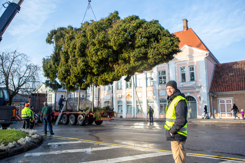 Täna jõudis Kuressaare keskväljakut ehtima selleaastane jõulupuu, mis toodi Saklast. Linnamajanduse juhi Mikk Tuisu sõnul on kuusk 15 meetri kõrgune. Puu toodi linna mööda Pihtla teed ja Tuisu kinnitusel oli […]