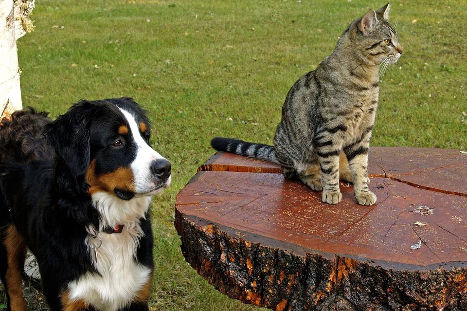 Lääne-Saare vallavalitsus peab vajalikuks selgitada, et vallas kehtivas koerte ja kasside pidamise eeskirjas on kokku koondatud tingimused ja nõuded, mis tulenevad üleriigilistest õigusaktidest. Kohalike omavalitsuste eeskirjade mõte on ennekõike koondada […]