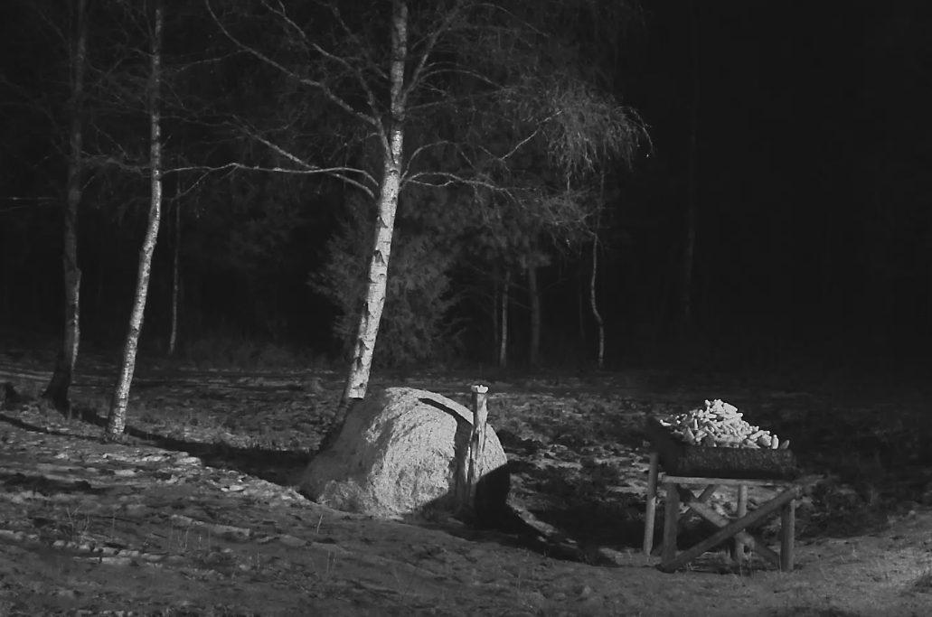 Saaremaal asuvast mägrakaamerast on taas saanud hirvekaamera. Möödunud aasta näitas, et hirved hakkavad söödaplatsi vastu suuremat huvi tundma alles novembrikuus püsivamate külmade saabudes, ja nüüd saab nende tegemisi kaamera vahendusel […]